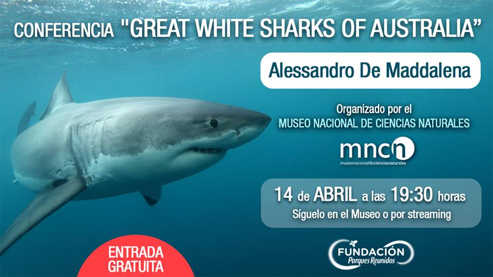 CONFERENCIA «GREAT WHITE SHARK OF AUSTRALIA»